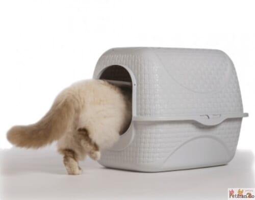 ظرف خاک بدون بو گربه